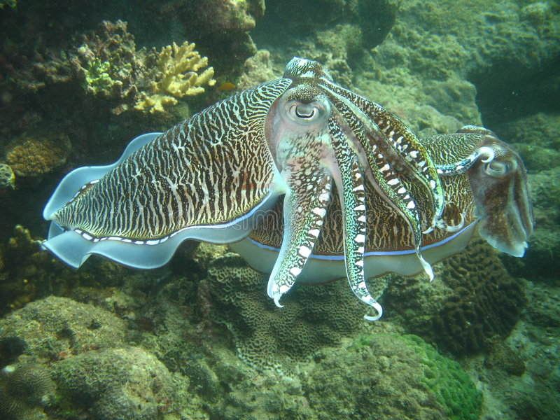 θάλασσα ζωής τροπική στοκ φωτογραφίες με δικαίωμα ελεύθερης χρήσης