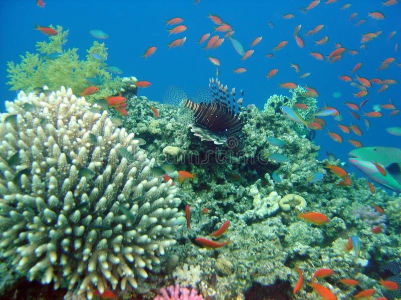 θάλασσα κάτω στοκ φωτογραφία με δικαίωμα ελεύθερης χρήσης
