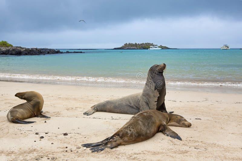 θάλασσα λιονταριών αποι&ka στοκ εικόνα με δικαίωμα ελεύθερης χρήσης