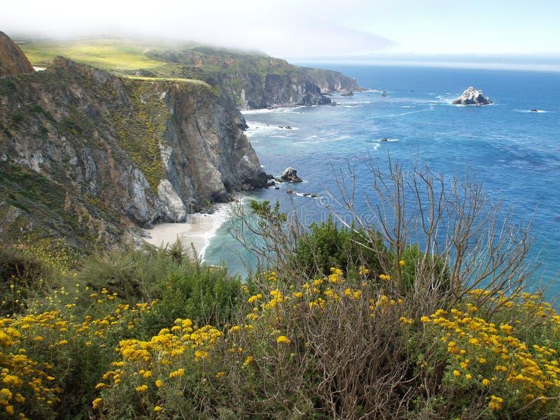 θάλασσα λουλουδιών από&t στοκ φωτογραφίες