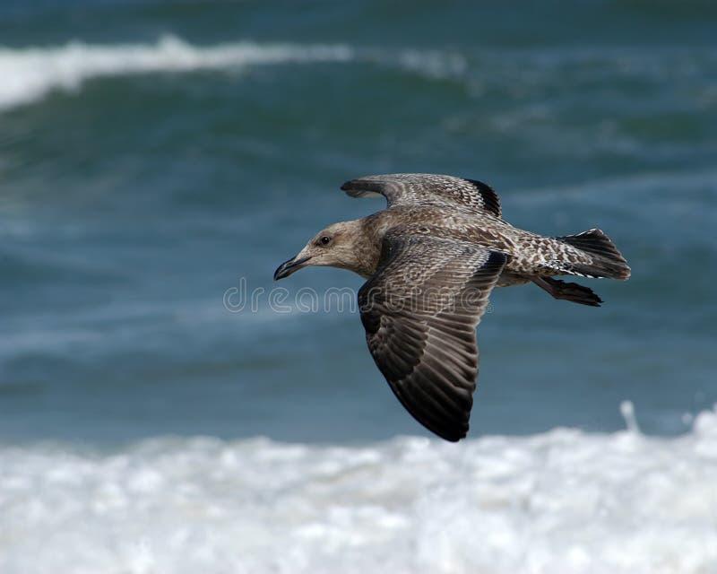 θάλασσα πουλιών στοκ εικόνα με δικαίωμα ελεύθερης χρήσης