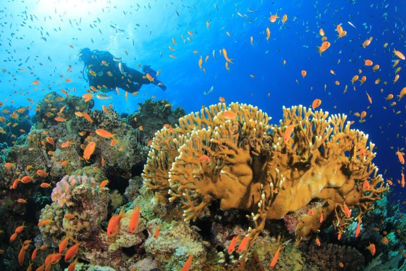 θάλασσα σκαφάνδρων κατάδυσης κόκκινη στοκ εικόνα με δικαίωμα ελεύθερης χρήσης