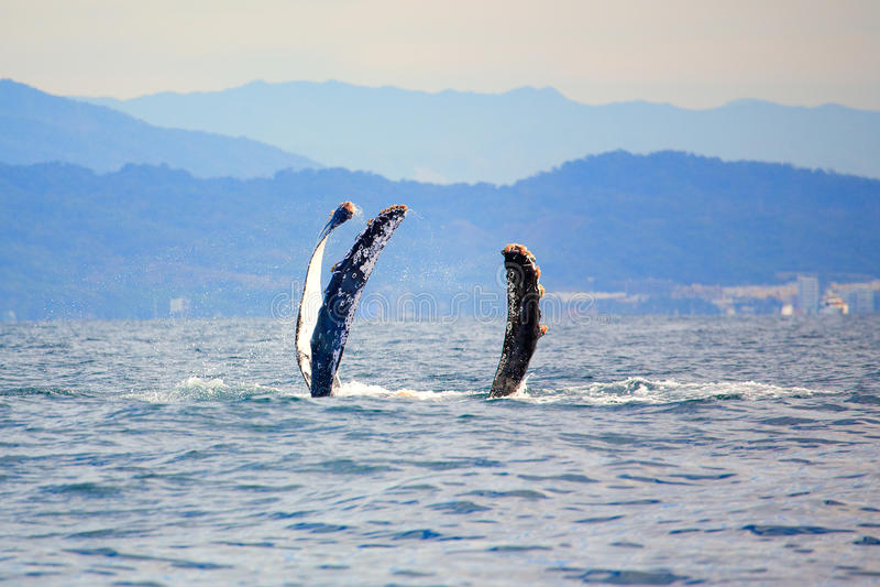 θάλασσα τεράτων στοκ εικόνα με δικαίωμα ελεύθερης χρήσης