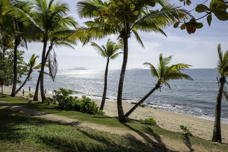 Θάλασσα φοινίκων διακοπών παραλιών, ωκεάνιες wavas και ηλιοφάνεια, παράδεισος στοκ φωτογραφία με δικαίωμα ελεύθερης χρήσης