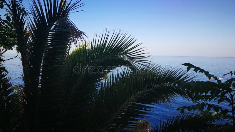 Θάλασσα φοινικών στοκ εικόνα με δικαίωμα ελεύθερης χρήσης