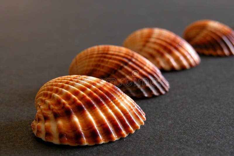 θάλασσα sheels στοκ φωτογραφίες