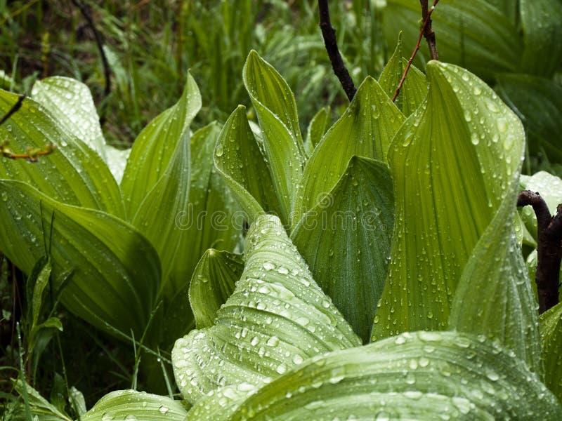 Θάμνοι μετά από τη βροχή σε ένα λιβάδι βουνών στοκ εικόνες