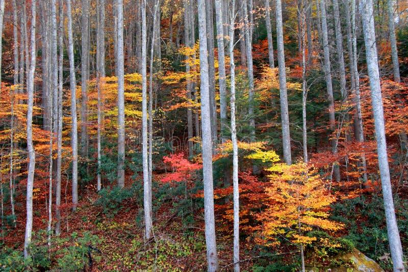 Θάμνοι φθινοπώρου στοκ εικόνες με δικαίωμα ελεύθερης χρήσης
