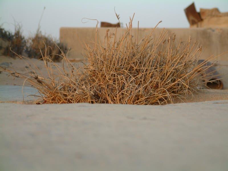 Download θάμνος στοκ εικόνες. εικόνα από βλάστηση, ανατολή, άμμος - 53474