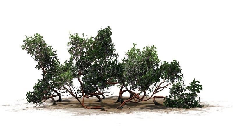 Θάμνος Manzanita Greenleaf διανυσματική απεικόνιση