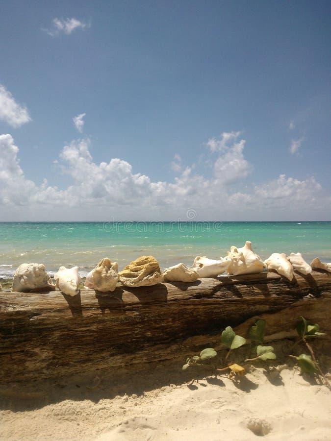 Θάλασσα και θαλασσινά κοχύλια στοκ φωτογραφία με δικαίωμα ελεύθερης χρήσης