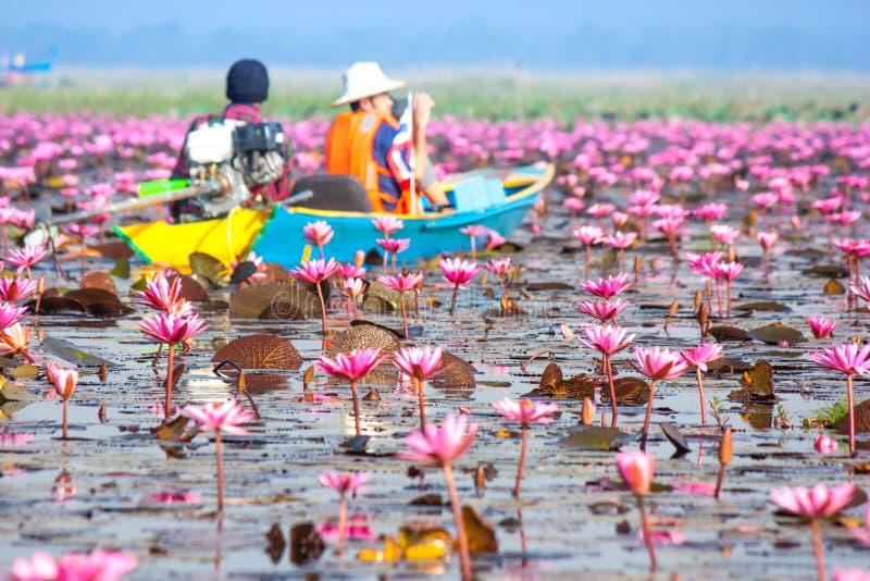 Θάλασσα του ρόδινου λωτού, Nonghan, Udonthani, Ταϊλάνδη στοκ φωτογραφία με δικαίωμα ελεύθερης χρήσης