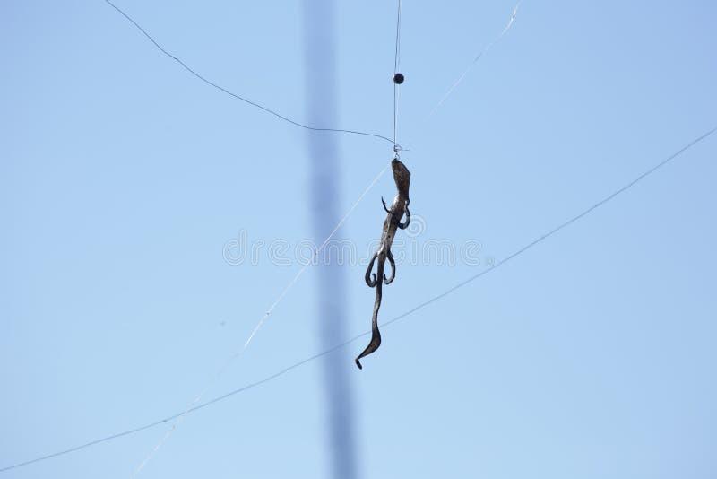 Θέλγητρο αλιείας που κολλιέται σε ένα δέντρο στοκ φωτογραφία