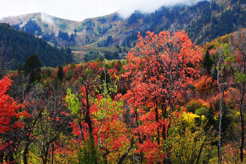 Θέρετρο βουνών Sundance Όμορφα χρώματα πτώσης δέντρων στοκ εικόνα με δικαίωμα ελεύθερης χρήσης
