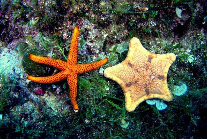 Θαλάσσια ζωή στοκ φωτογραφίες