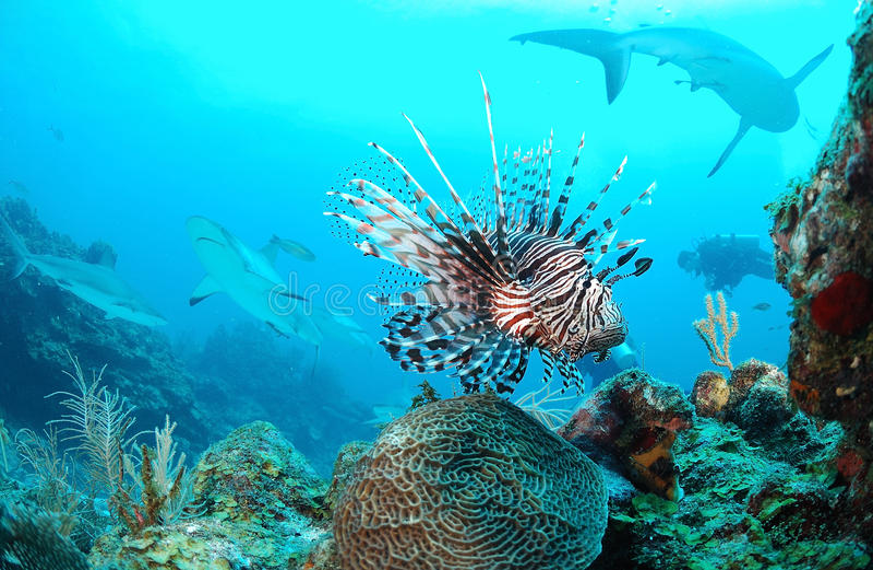 Θαλάσσια ζωή στοκ εικόνα