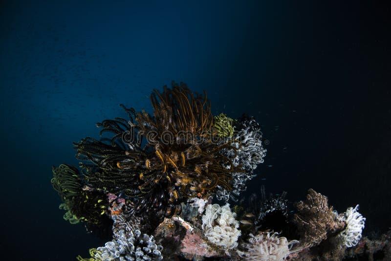 Θαλάσσια κοραλλιογενής ύφαλος ζωής στο σκούρο μπλε υπόβαθρο στοκ φωτογραφία με δικαίωμα ελεύθερης χρήσης
