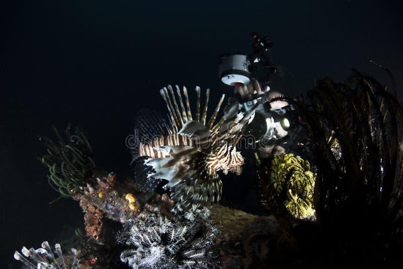 Θαλάσσια κοραλλιογενής ύφαλος ζωής στο σκούρο μπλε υπόβαθρο στοκ εικόνες