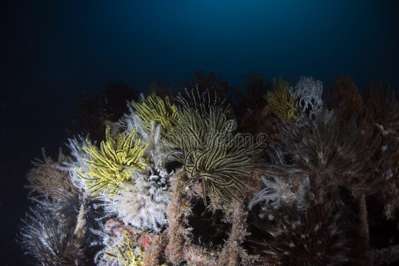 Θαλάσσια υποβρύχια σκηνή ζωής στο σκούρο μπλε υπόβαθρο στοκ φωτογραφίες με δικαίωμα ελεύθερης χρήσης