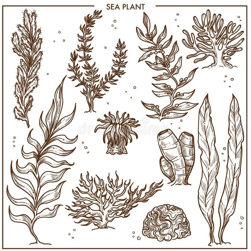 Θαλάσσια φυτά με τους μακροχρόνιους μίσχους ή τη σκληρή εξωτερική επιφάνεια διανυσματική απεικόνιση