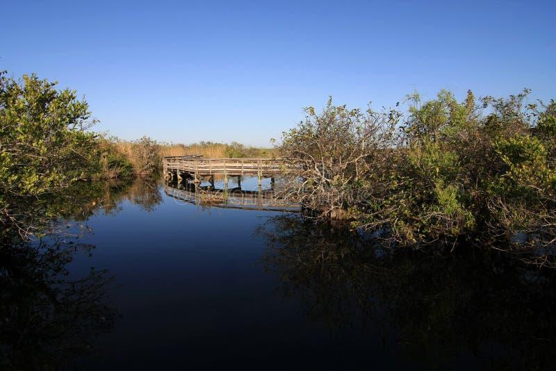 Θαλάσσιος περίπατος ιχνών Anhinga στο εθνικό πάρκο Everglades στοκ εικόνα
