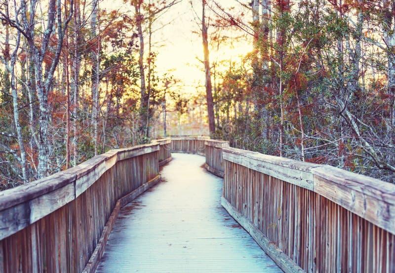 Θαλάσσιος περίπατος σε Everglades στοκ εικόνες με δικαίωμα ελεύθερης χρήσης