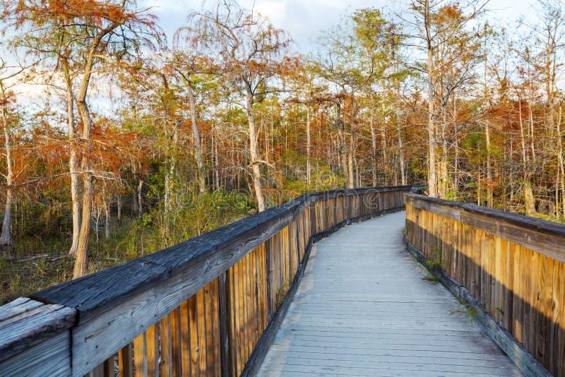 Θαλάσσιος περίπατος σε Everglades στοκ εικόνα με δικαίωμα ελεύθερης χρήσης