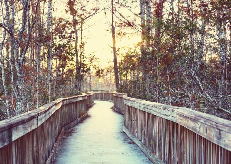 Θαλάσσιος περίπατος σε Everglades στοκ φωτογραφίες