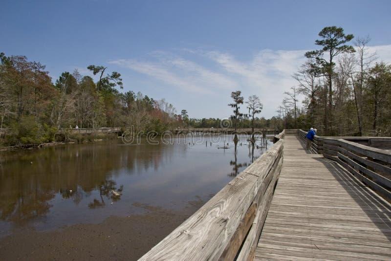 Θαλάσσιος περίπατος throughtout το έλος στοκ φωτογραφία με δικαίωμα ελεύθερης χρήσης