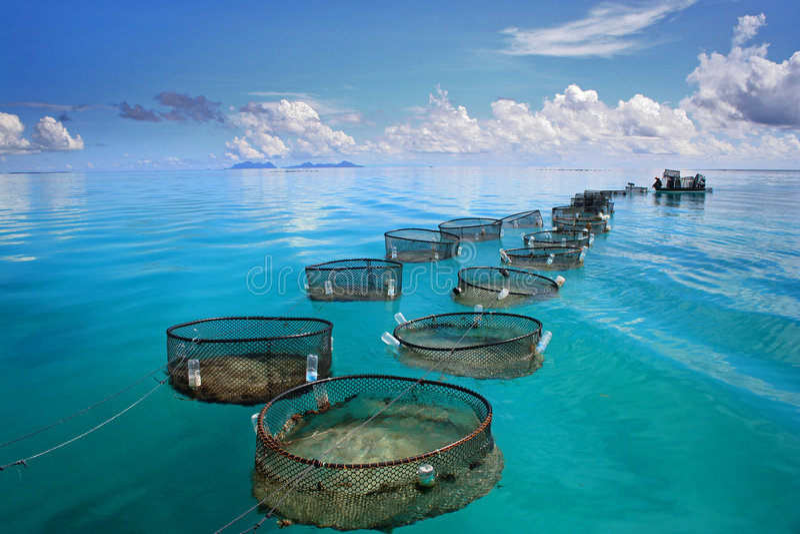 θαλάσσιο τυρκουάζ θάλασσας αλιείας στοκ εικόνες