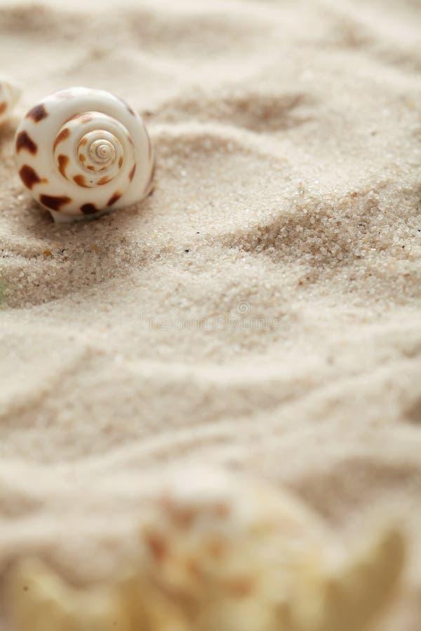 Θαλασσινά κοχύλια και άμμος στοκ εικόνες