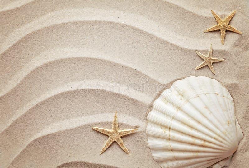 Θαλασσινά κοχύλια και άμμος στοκ φωτογραφία με δικαίωμα ελεύθερης χρήσης