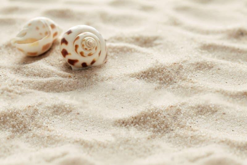 Θαλασσινά κοχύλια και άμμος στοκ εικόνες με δικαίωμα ελεύθερης χρήσης