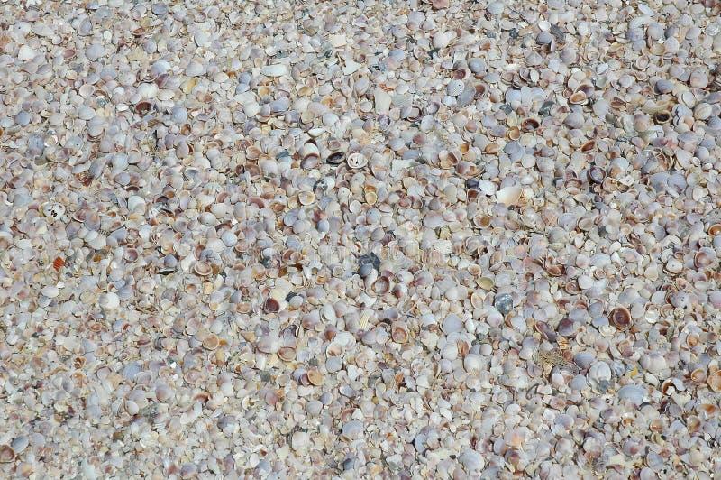 Download θαλασσινά κοχύλια παραλ στοκ εικόνα. εικόνα από μαλάκιο - 13181267