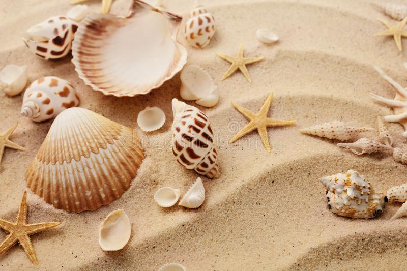 Θαλασσινά κοχύλια στην παραλία άμμου στοκ εικόνες
