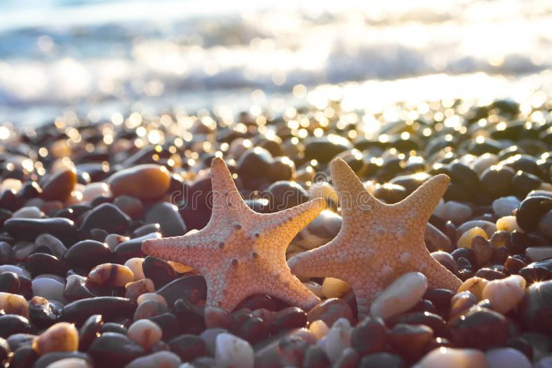 Θαλασσινά κοχύλια στην παραλία στοκ φωτογραφία με δικαίωμα ελεύθερης χρήσης
