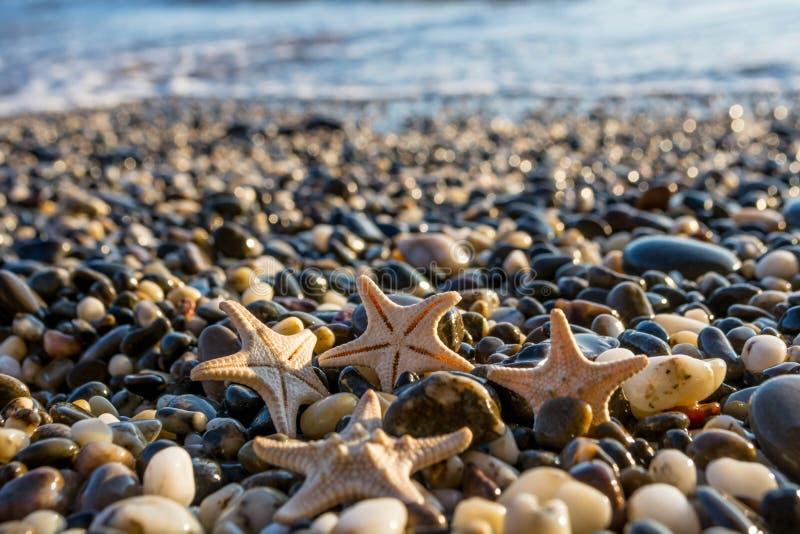 Θαλασσινά κοχύλια στην παραλία στοκ εικόνα με δικαίωμα ελεύθερης χρήσης