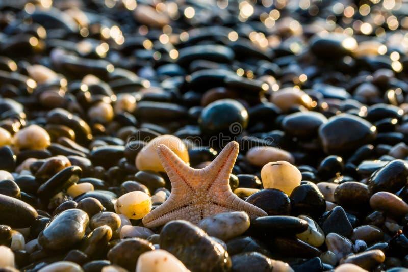 Θαλασσινά κοχύλια στην παραλία στοκ φωτογραφίες με δικαίωμα ελεύθερης χρήσης