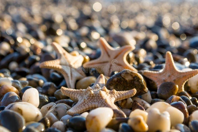 Θαλασσινά κοχύλια στην παραλία στοκ φωτογραφία