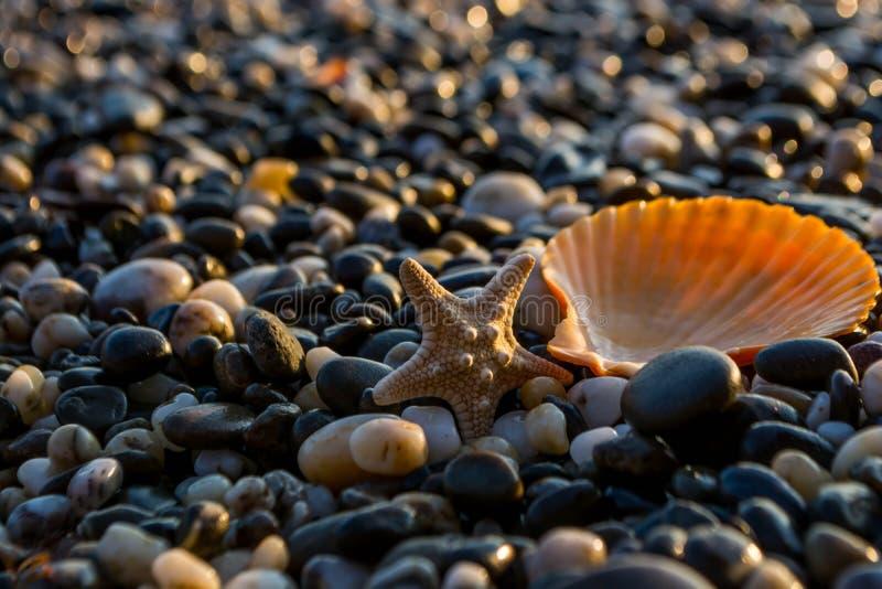 Θαλασσινά κοχύλια στην παραλία στοκ εικόνα