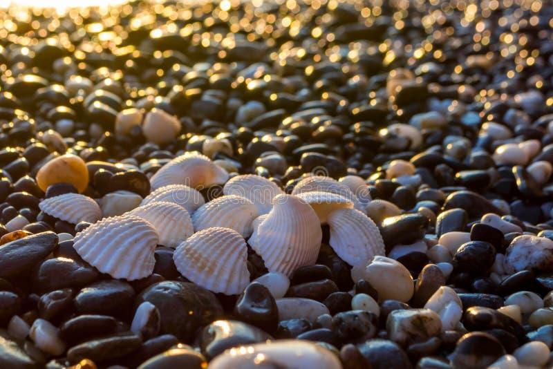 Θαλασσινά κοχύλια στην παραλία στοκ φωτογραφίες