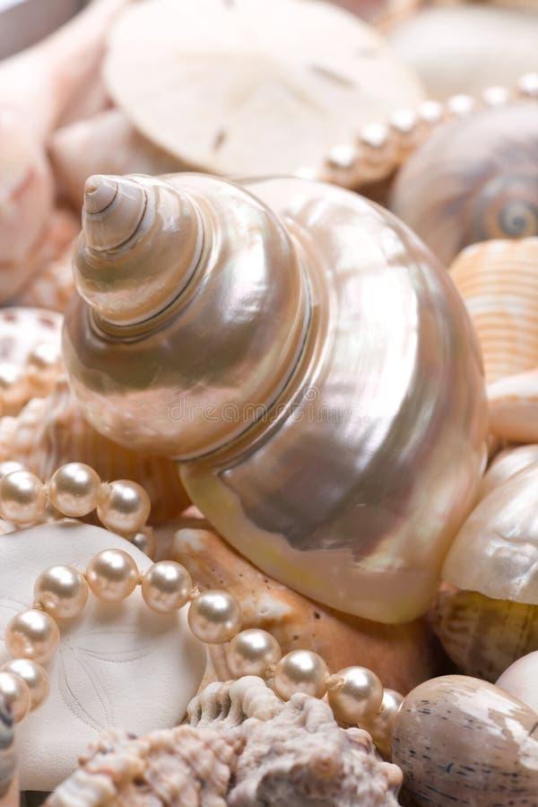 θαλασσινό κοχύλι ανασκόπ& στοκ φωτογραφία με δικαίωμα ελεύθερης χρήσης