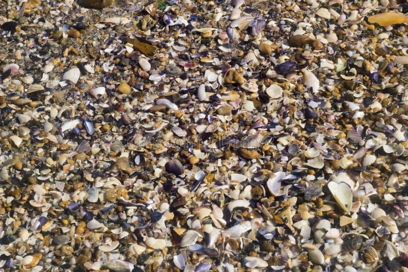 Θαλασσινό κοχύλι στην παραλία στην ανατολή στοκ φωτογραφίες με δικαίωμα ελεύθερης χρήσης