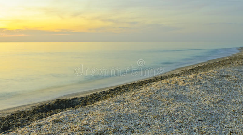 θαλασσινό κοχύλι goldmine στοκ φωτογραφίες με δικαίωμα ελεύθερης χρήσης