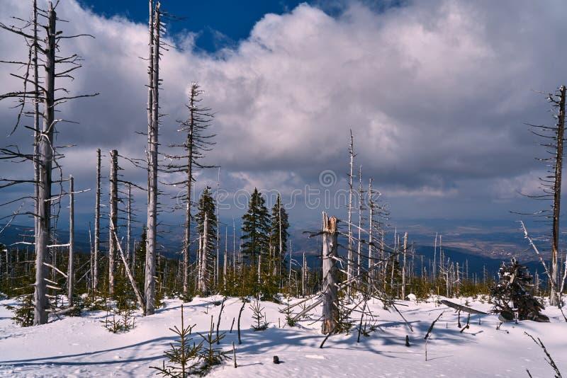 Θαμμένος στα δασικά και ξηρά δέντρα χιονιού στοκ φωτογραφία