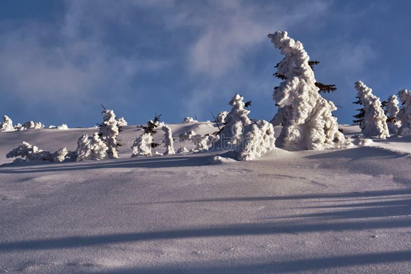 Θαμμένος στο δάσος χιονιού στα γιγαντιαία βουνά στοκ εικόνα