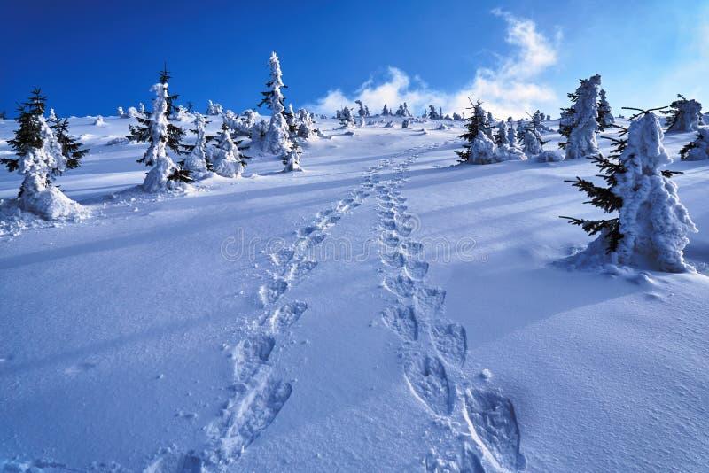 Θαμμένος στο ίχνος πεζοπορίας χιονιού στα γιγαντιαία βουνά στοκ φωτογραφία με δικαίωμα ελεύθερης χρήσης