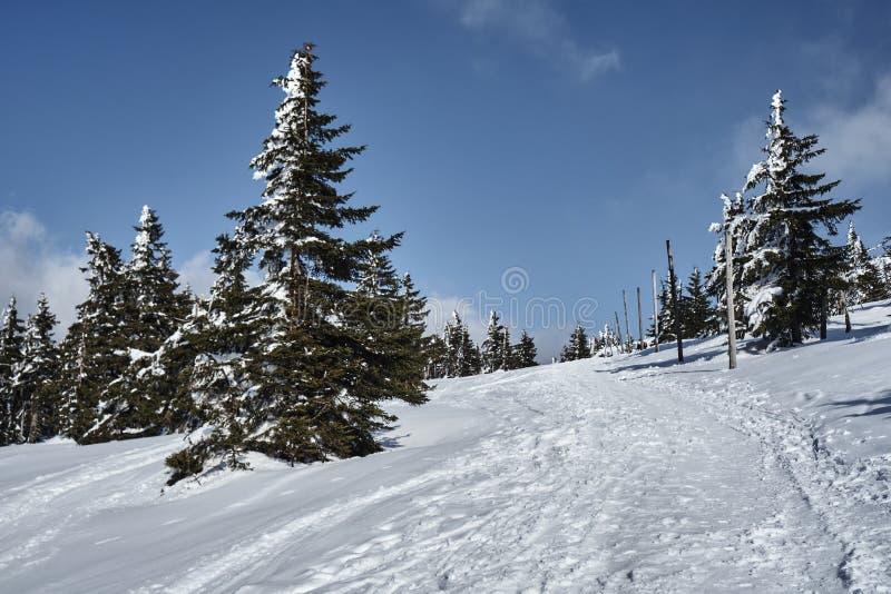 Θαμμένος στο ίχνος πεζοπορίας χιονιού στοκ εικόνα