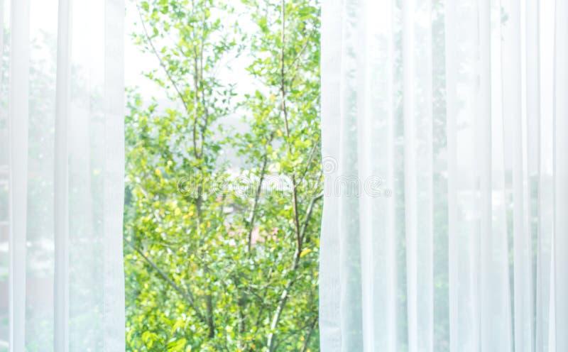 Θαμπάδα της άσπρης κουρτίνας με την άποψη παραθύρων/τον κήπο δέντρων στοκ φωτογραφίες με δικαίωμα ελεύθερης χρήσης