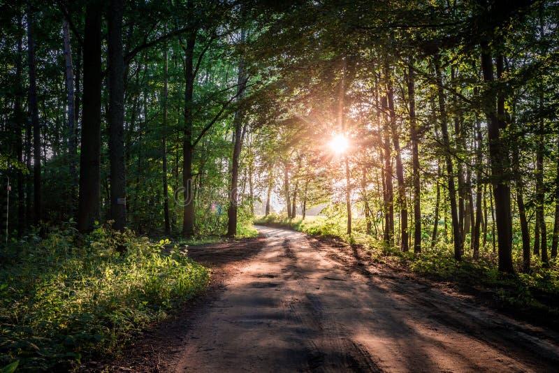 Θαυμάσια ανατολή στο θερινό δάσος στην Πολωνία στοκ εικόνα με δικαίωμα ελεύθερης χρήσης